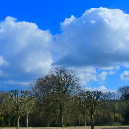 Tree, sky, and clouds at Greenwood House in Spring