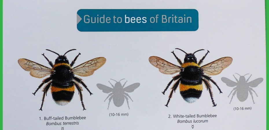Excerpt from front cover FSC Guide to bees of Britain