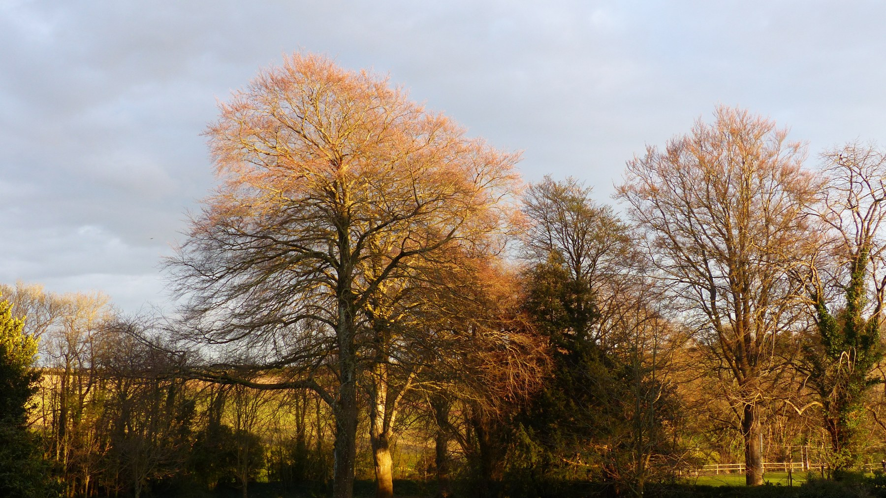 Tree tops lit by late evening sun in April