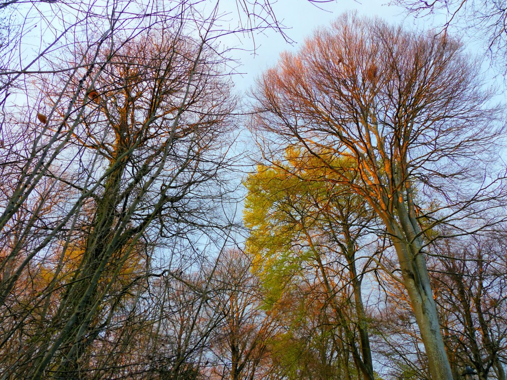 Trees in the light of the setting sun in April