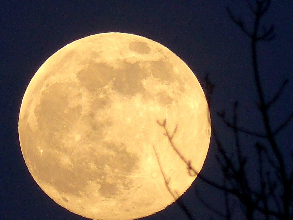 Large Pink Super Moon