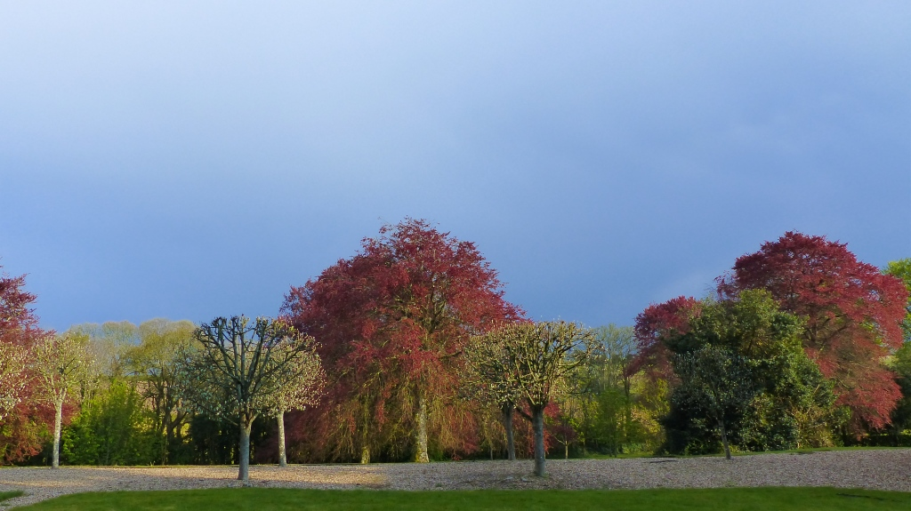 Trees with new red leaves after rain with dark sky in slanting late afternoon light