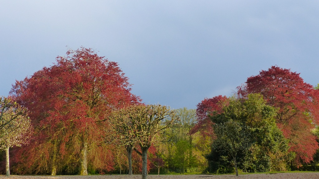 Trees with new leaves after rain with dark sky in slanting late afternoon light