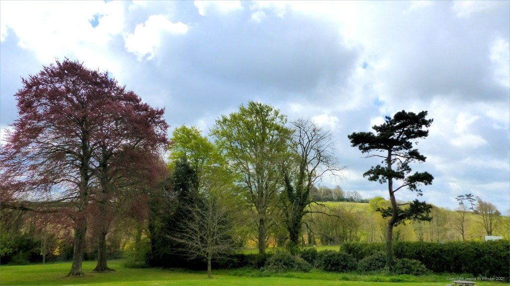 Trees in Spring landscape with cloudy sky