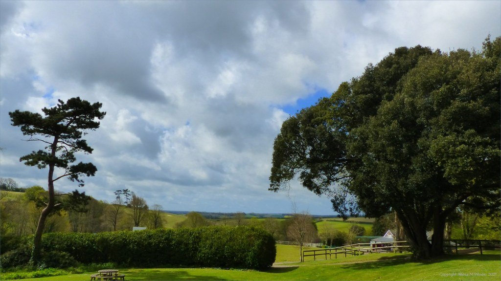 Trees in Spring landscape with cloudy skies