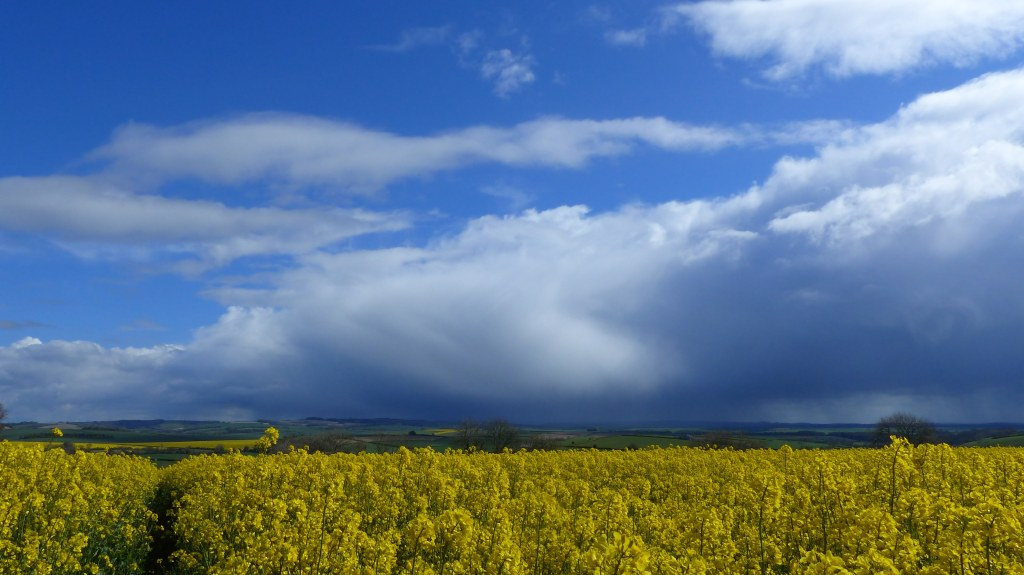Field home of the round barrow with yellow rapeseed flowers against sky with rain clouds