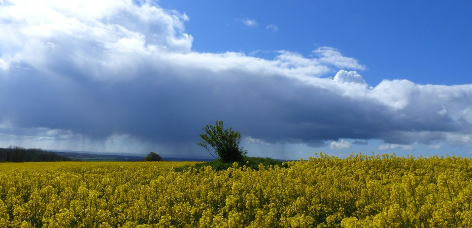 Round barrow amongst yellow rapeseed flowers against blue sky with rain clouds