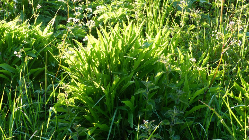 Meadow grasses and wild plants in late evening sunlight