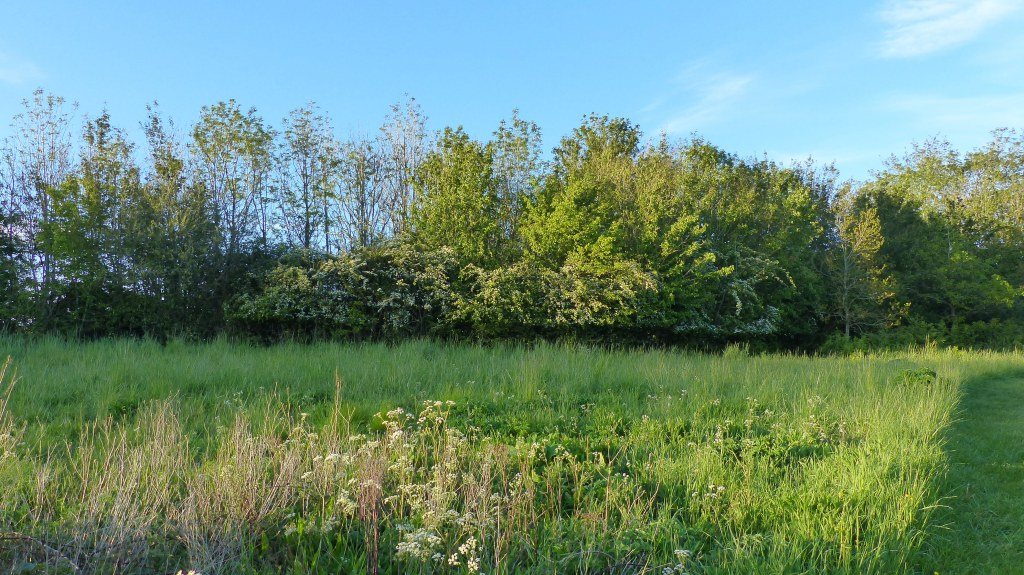 Trees and grasses in evening sunlight with blue sky