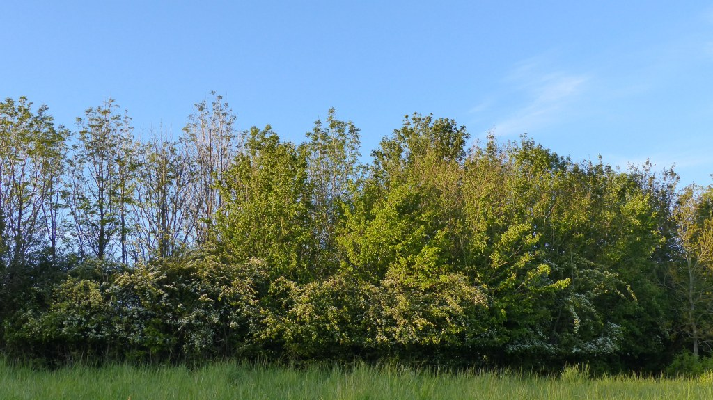 Trees in evening sunlight with blue sky