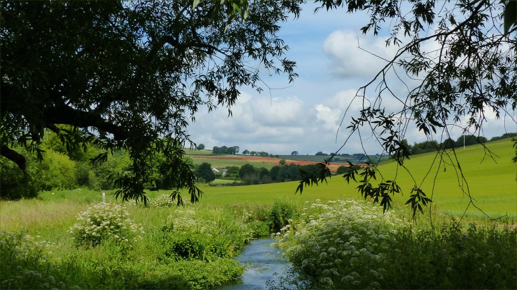 Countryside view with stream fields and overhanging trees