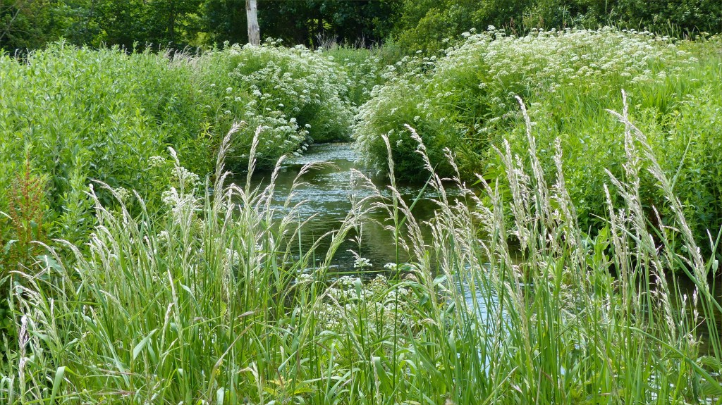 Luxuriant riverbank vegetation beside water