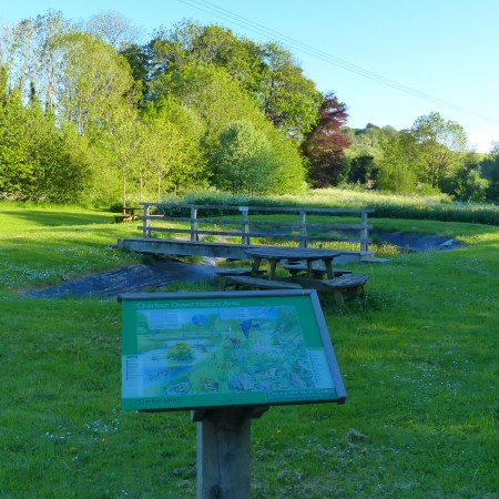 View of Charlton Down Nature Reserve on a late May evening
