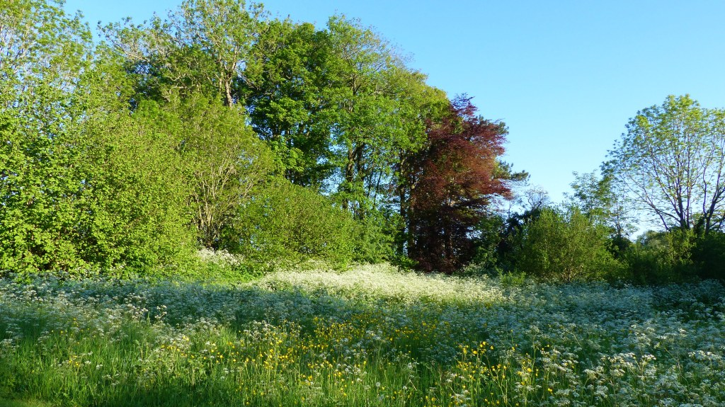 Trees and wild flowers on a summer evening