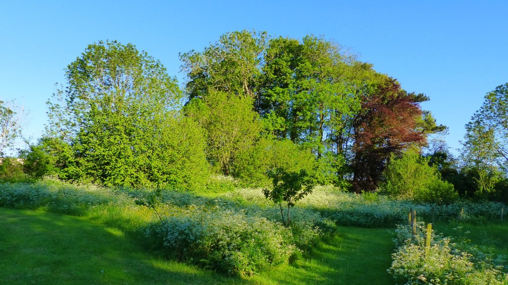 Trees and vegetation on an early summer evening with blue sky