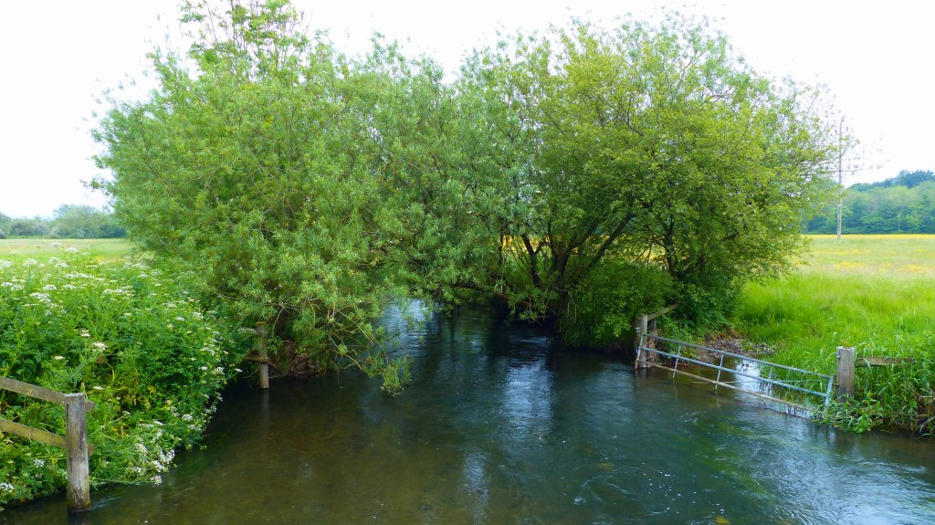 Willow trees, river and fields