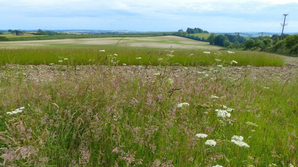 Vista of fields and sky at Charlton Down in Dorset