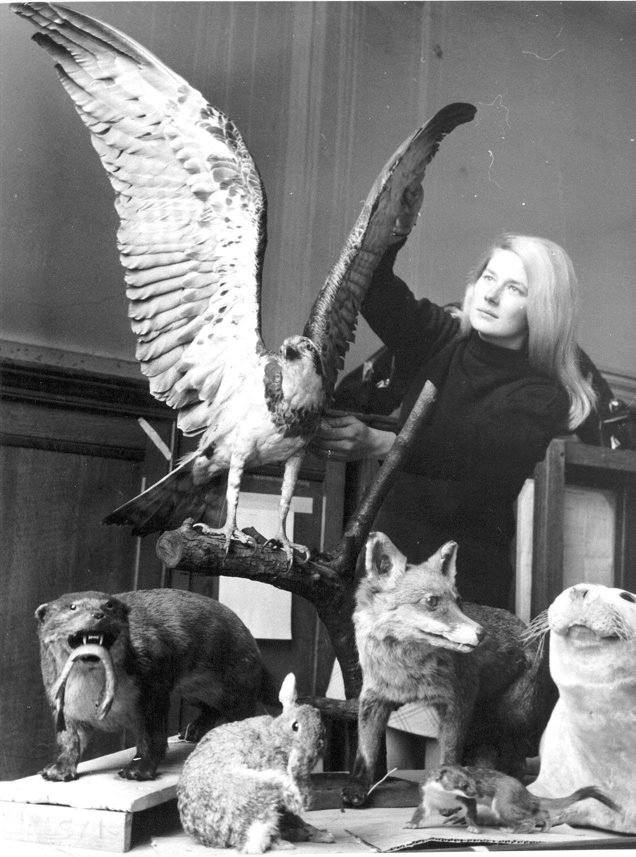 Woman with taxidermy birds and animals in museum