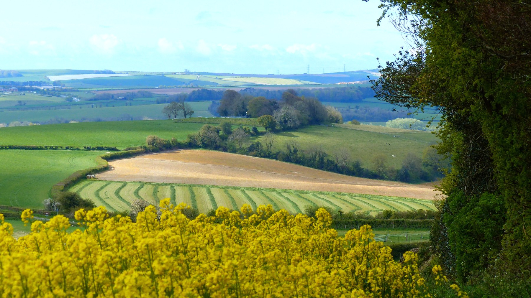Countryside view with fields, hedgerows and trees.