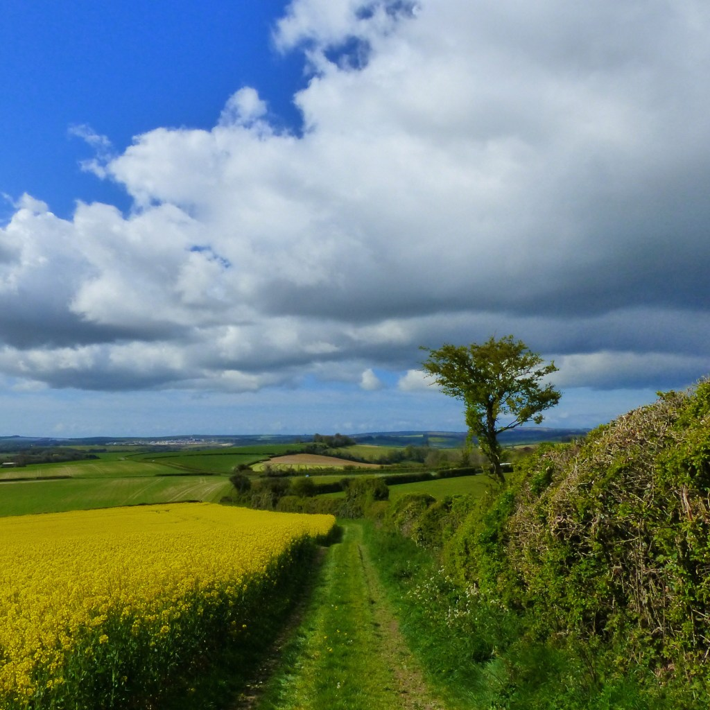 Countryside view with fields, hedgerows and trees, white clouds, blue sky