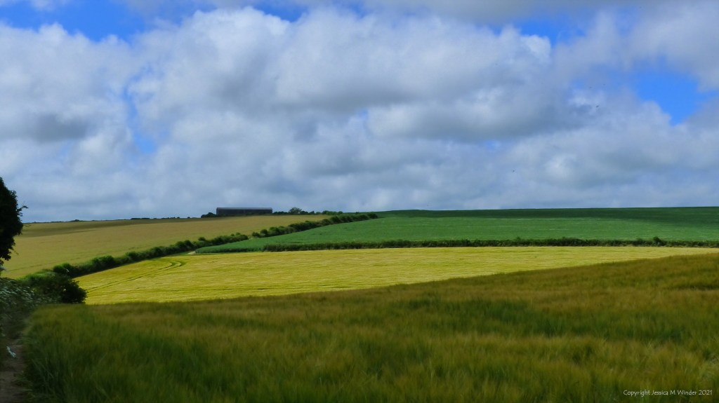 Fields of crops and hedgerows with white clouds and blue sky