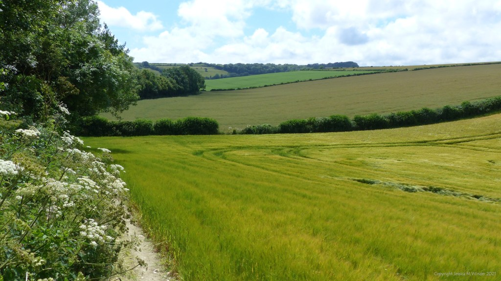 Fields and hedgerows in the July Dorset countryside