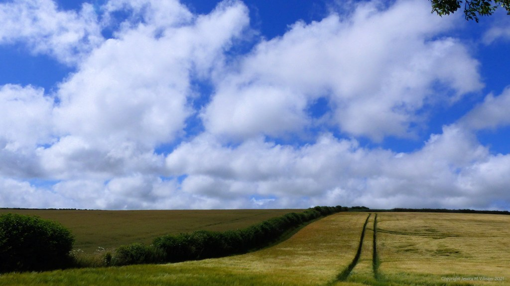Fields, hedgerows, blue sky, and white fluffy clouds.