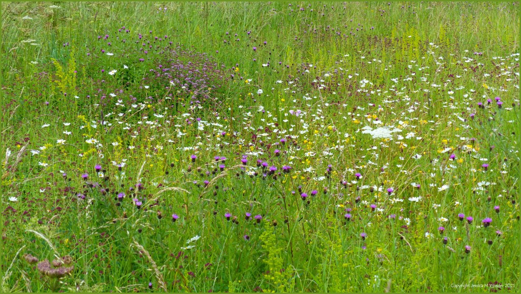 Wild flowers in the grass