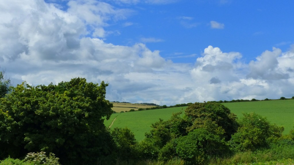 Fields at Charlton Down in Dorset with blue sky and white clouds