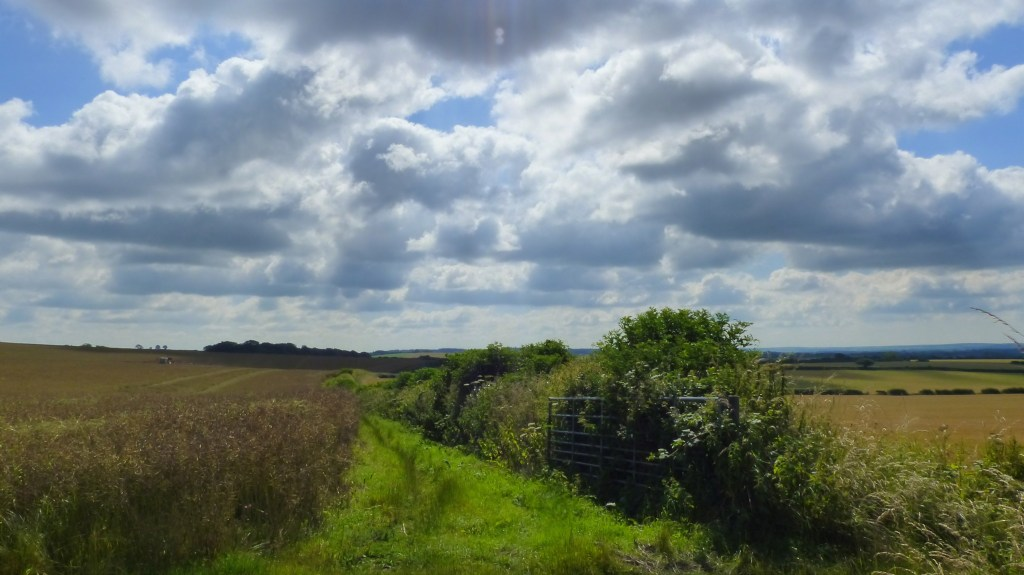 Countryside fields, hedgerow, and cloudy sky