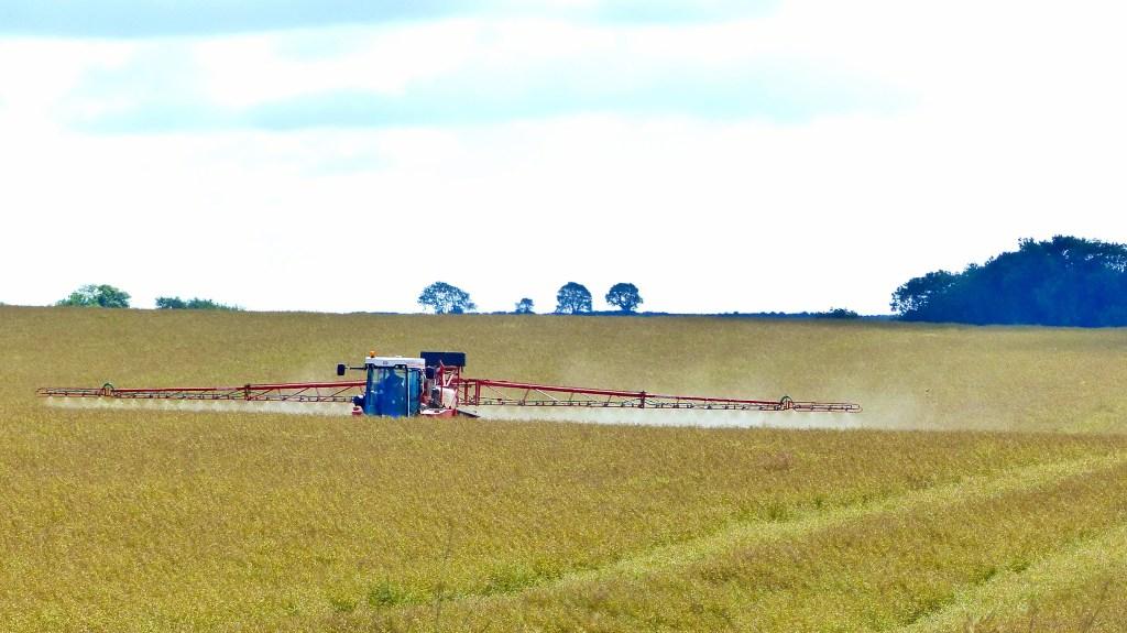 Crop spraying in field of rapeseed