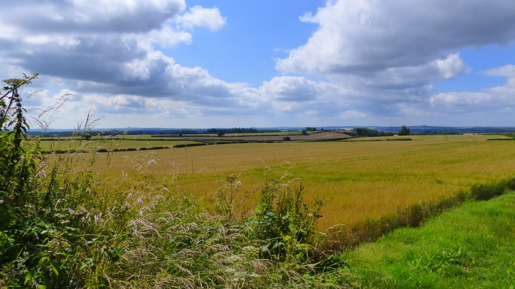 Countryside fields and hedgerows with blue sky and clouds