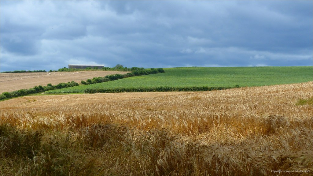 Cultivated fields of the Dorset countryside in summer.