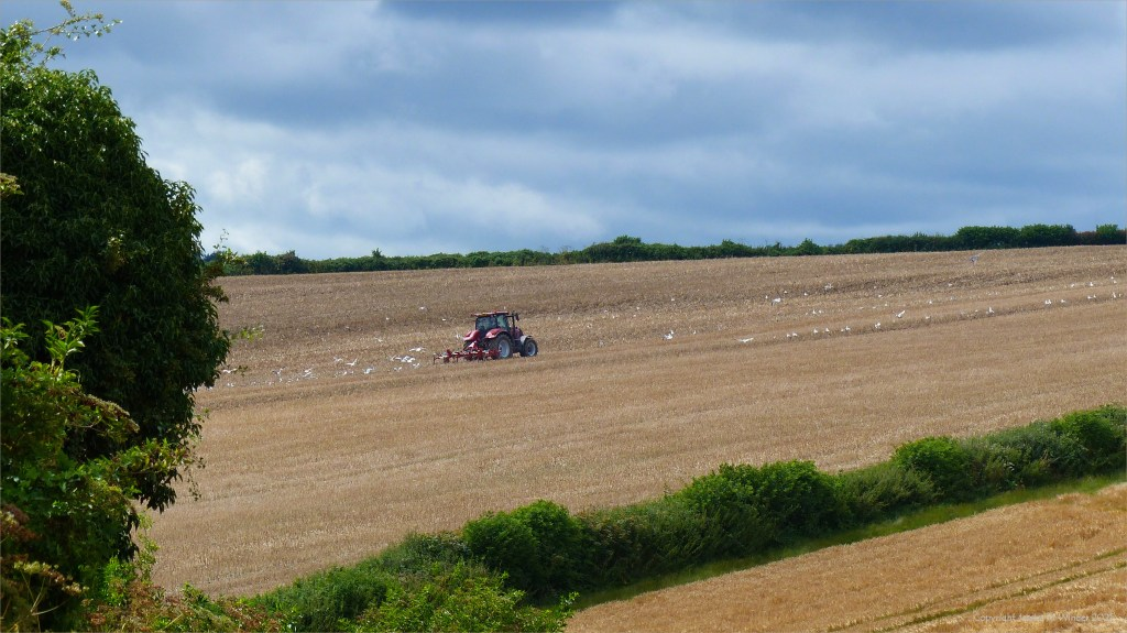 Tractor ploughing field in which the oilseed rape crop has been harvested