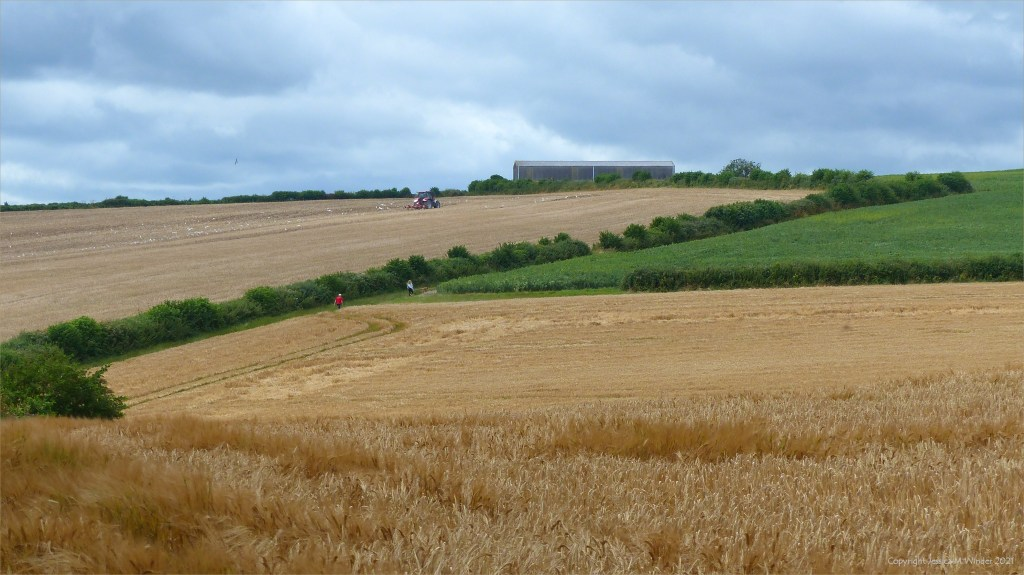 Cultivated Dorset fields with barley and oilseed rape in summer