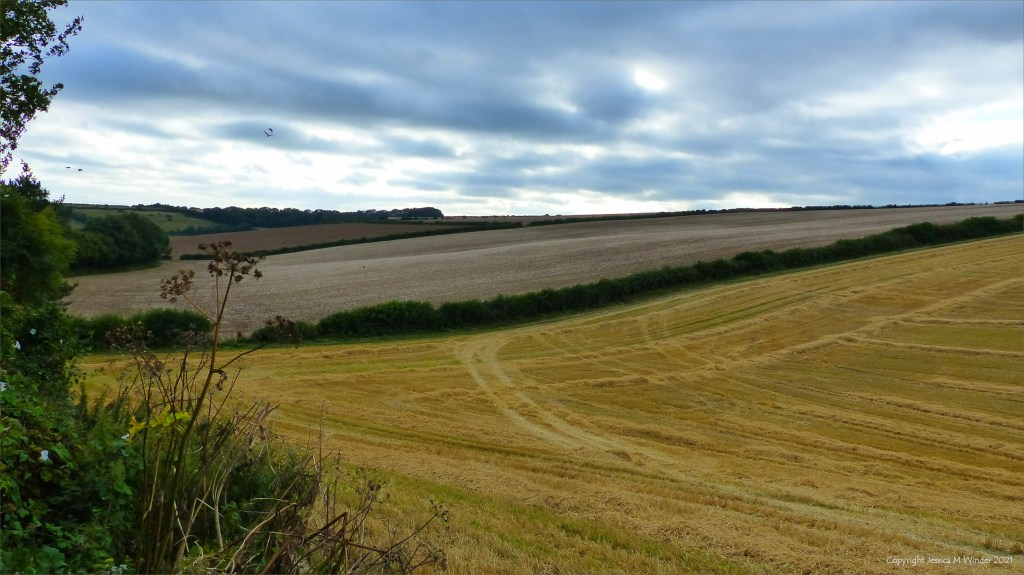 Pattern of tracks and rows of straw in harvested barley field
