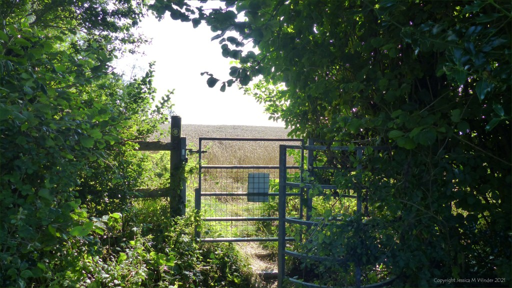 Stile or kissing gate with trees and wheat field
