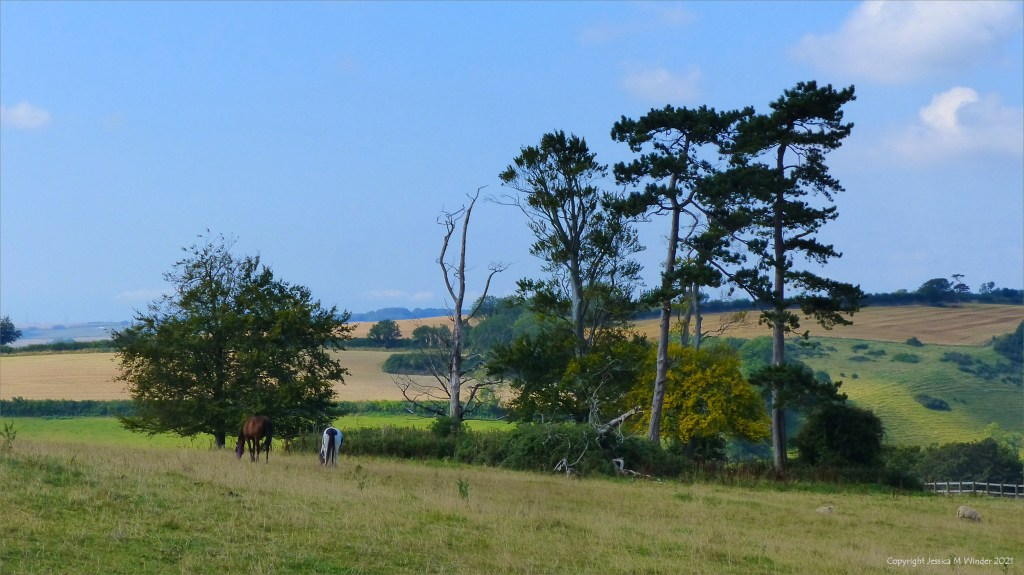 Horses grazing on the slope of a hill side in the Dorset countryside