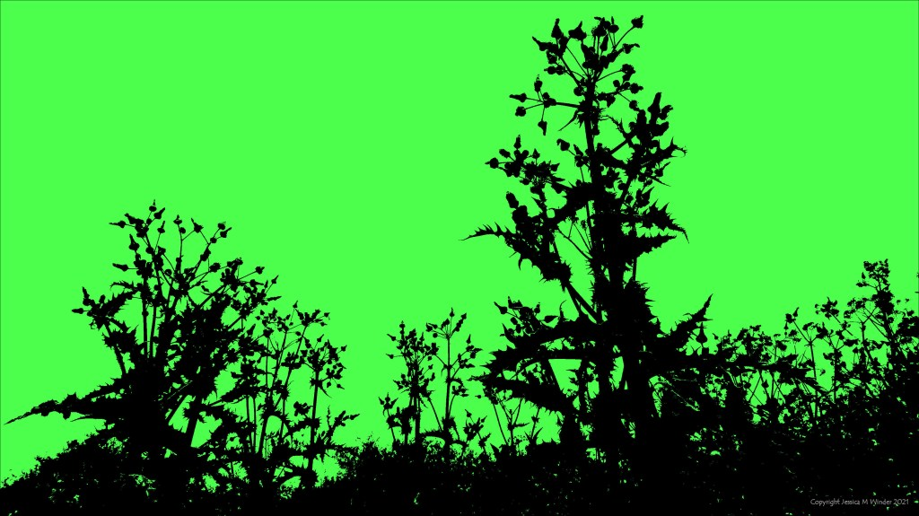 Silhouette from a photograph of Thistles, on green background