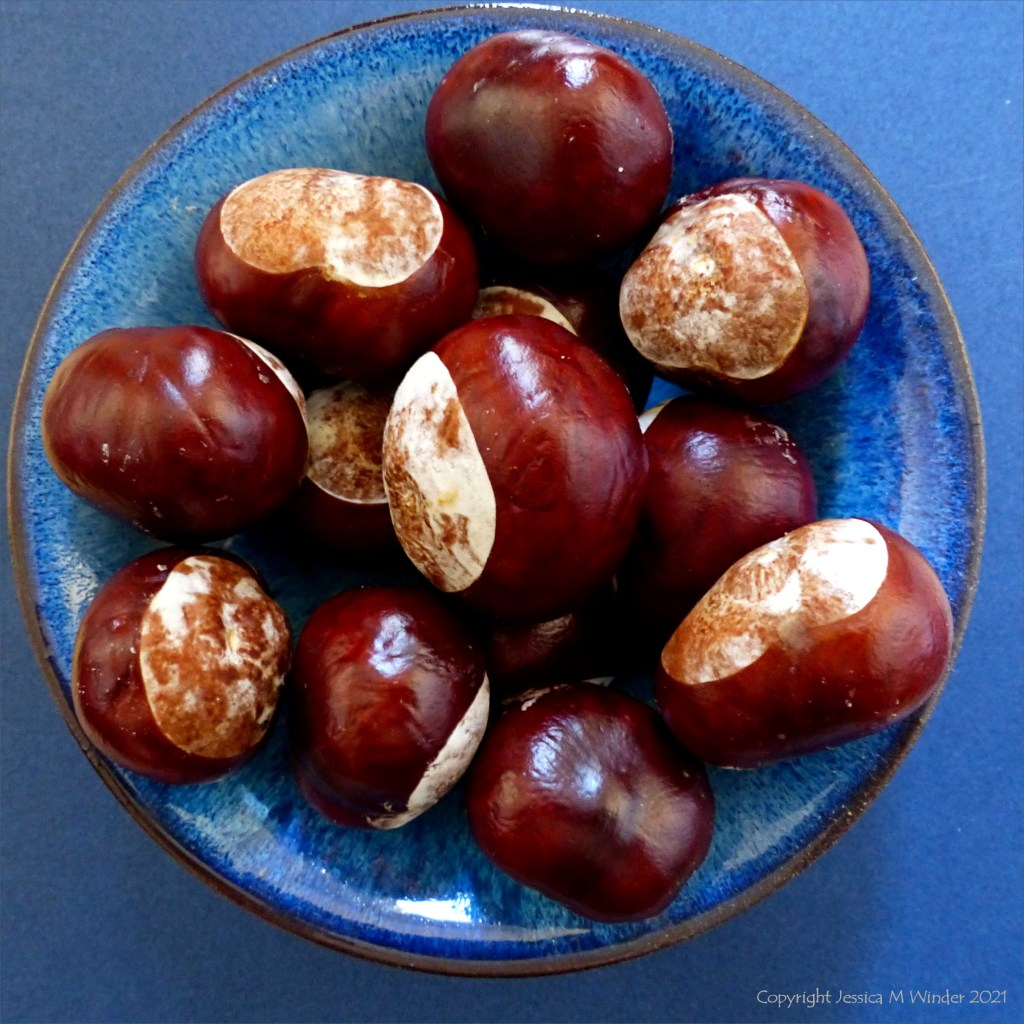 A blue bowl full of horse chestnut conkers